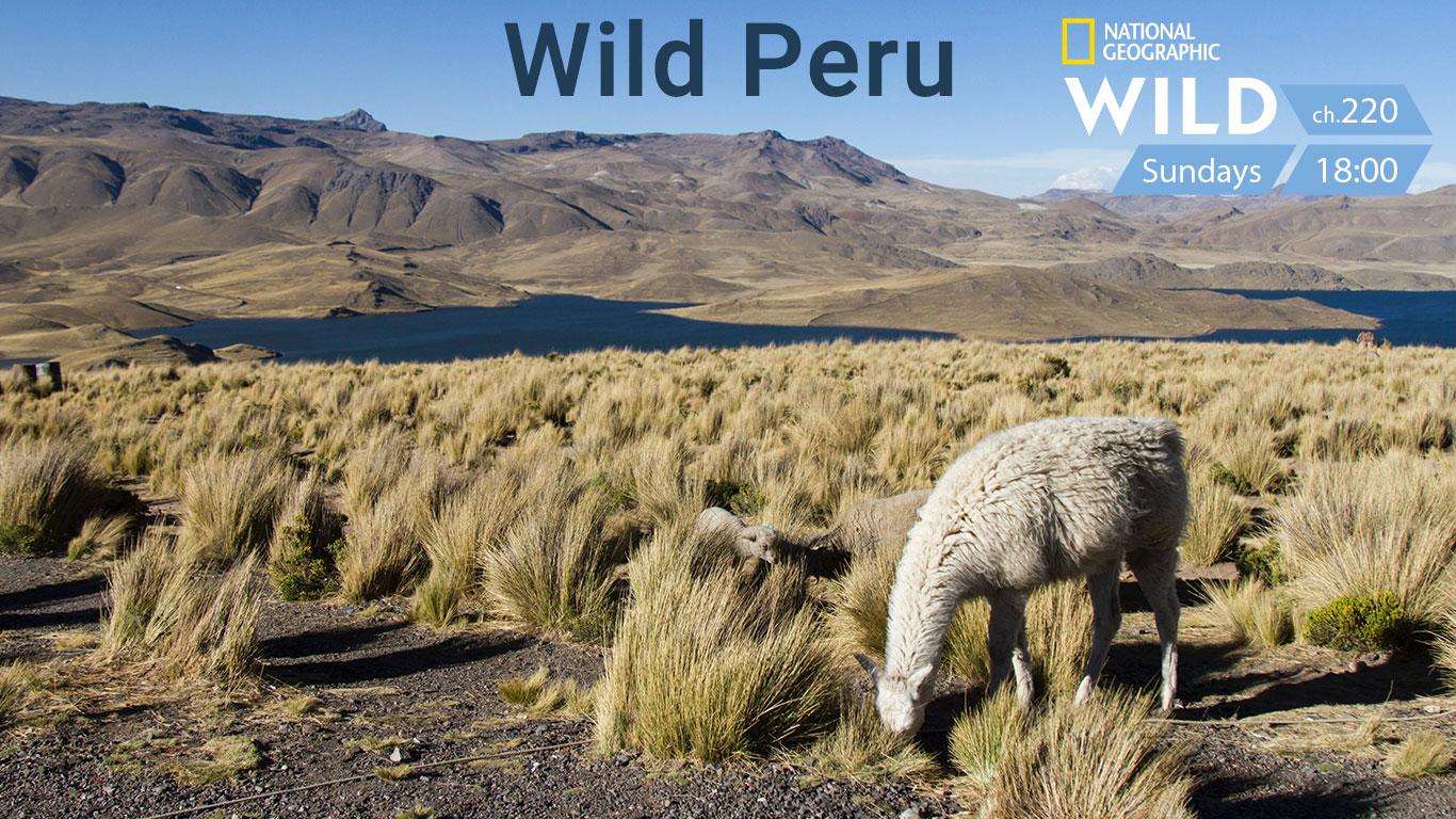 Wild Peru Andes Battelground on Nat Geo Wild on StarSat