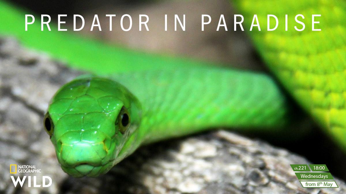 Predator in Paradise on National Geographic Wild on StarSat