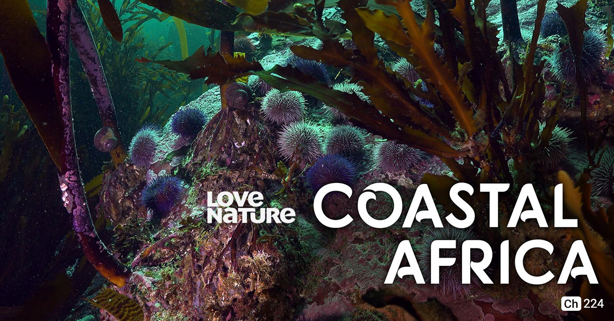 Coastal Africa on Love Nature on StarSat