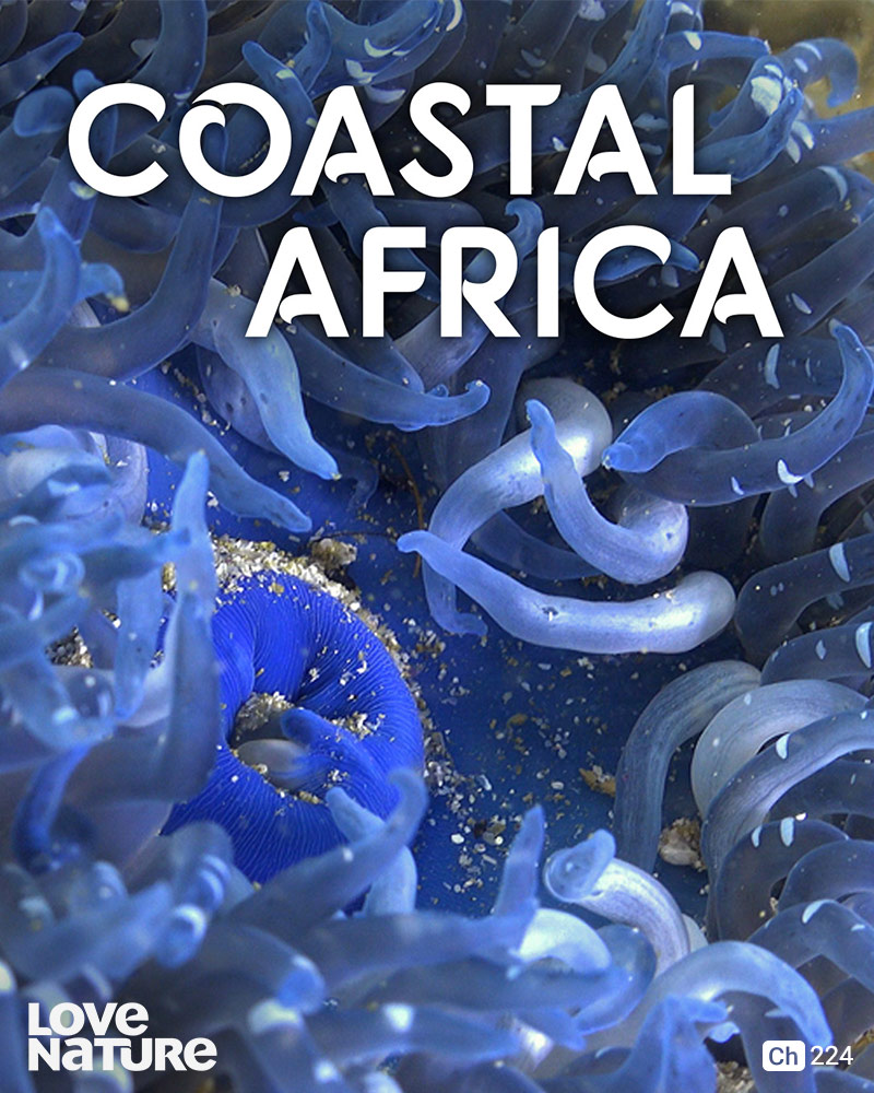 Coastal Africa on Love Nature on StarSat (mobile)
