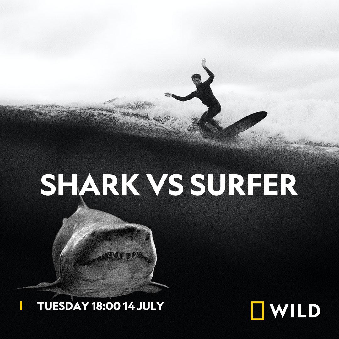 Shark vs Surfer (Sharkfest) on National Geographic Wild on StarSat - Web