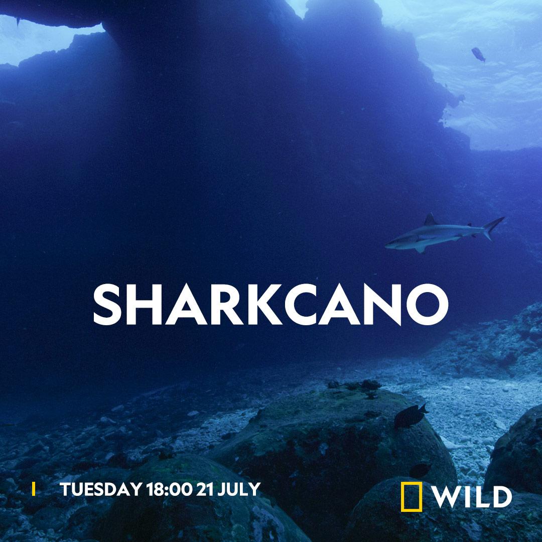 Sharkcano on National Geographic Wild on StarSat - Web