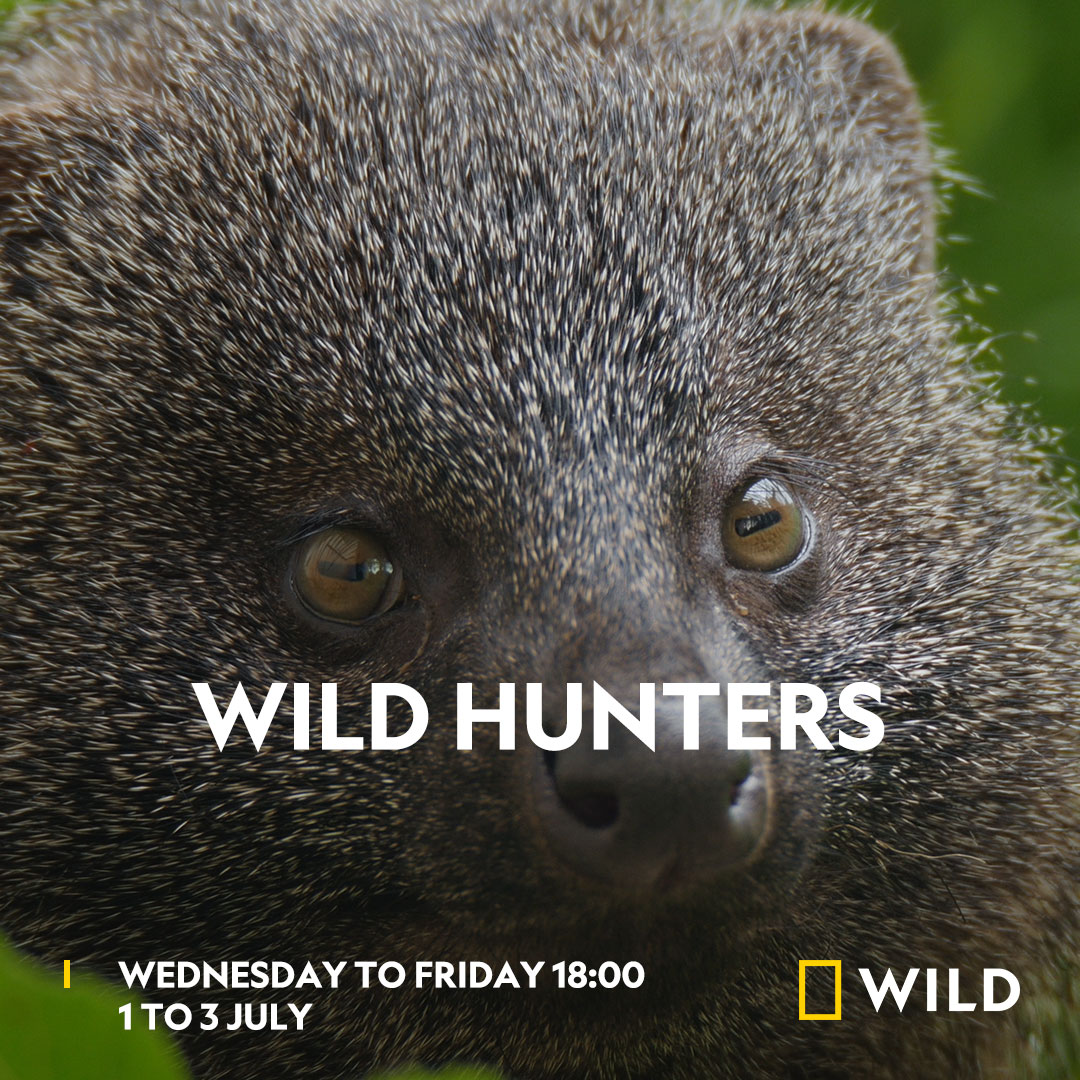 Wild Hunters on National Geographic Wild on StarSat - Web