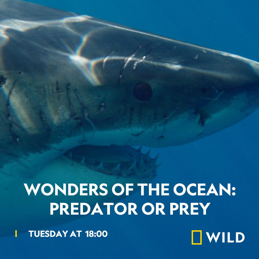 Wonders of the Ocean - Predator or Prey on National Geographic Wild on StarSat - Web