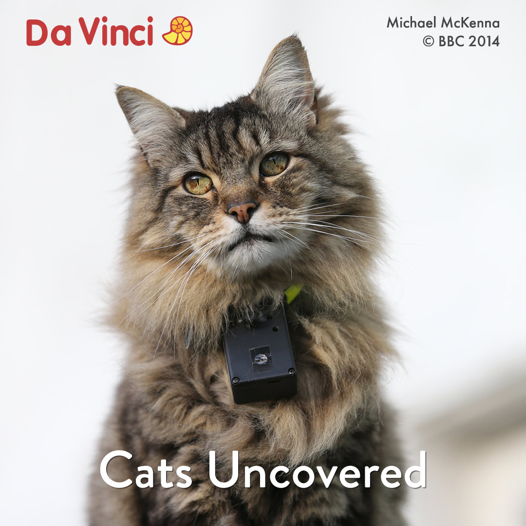 Cats Uncovered on DaVinci on StarSat O2