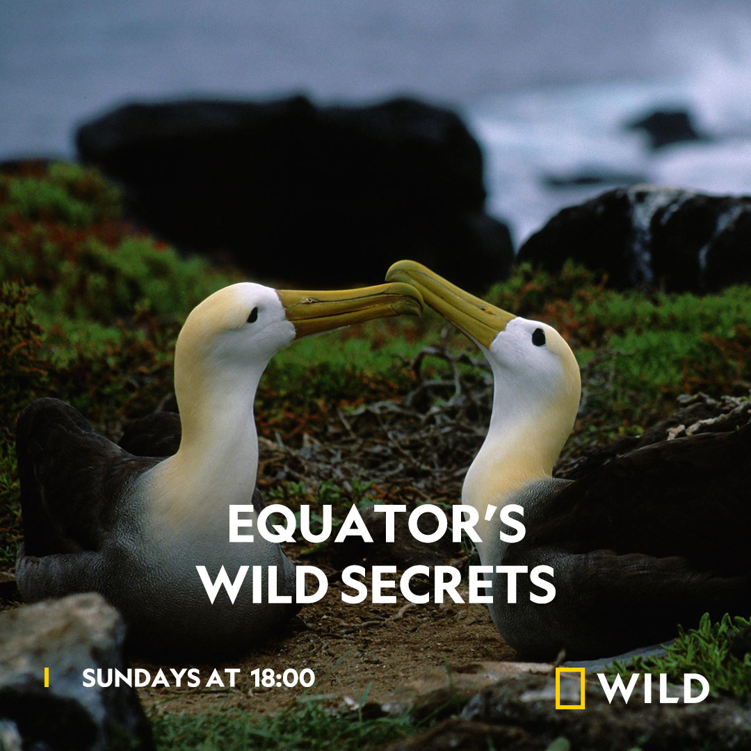 Equator's Wild Secrets on National Geographic Wild on StarSat - web