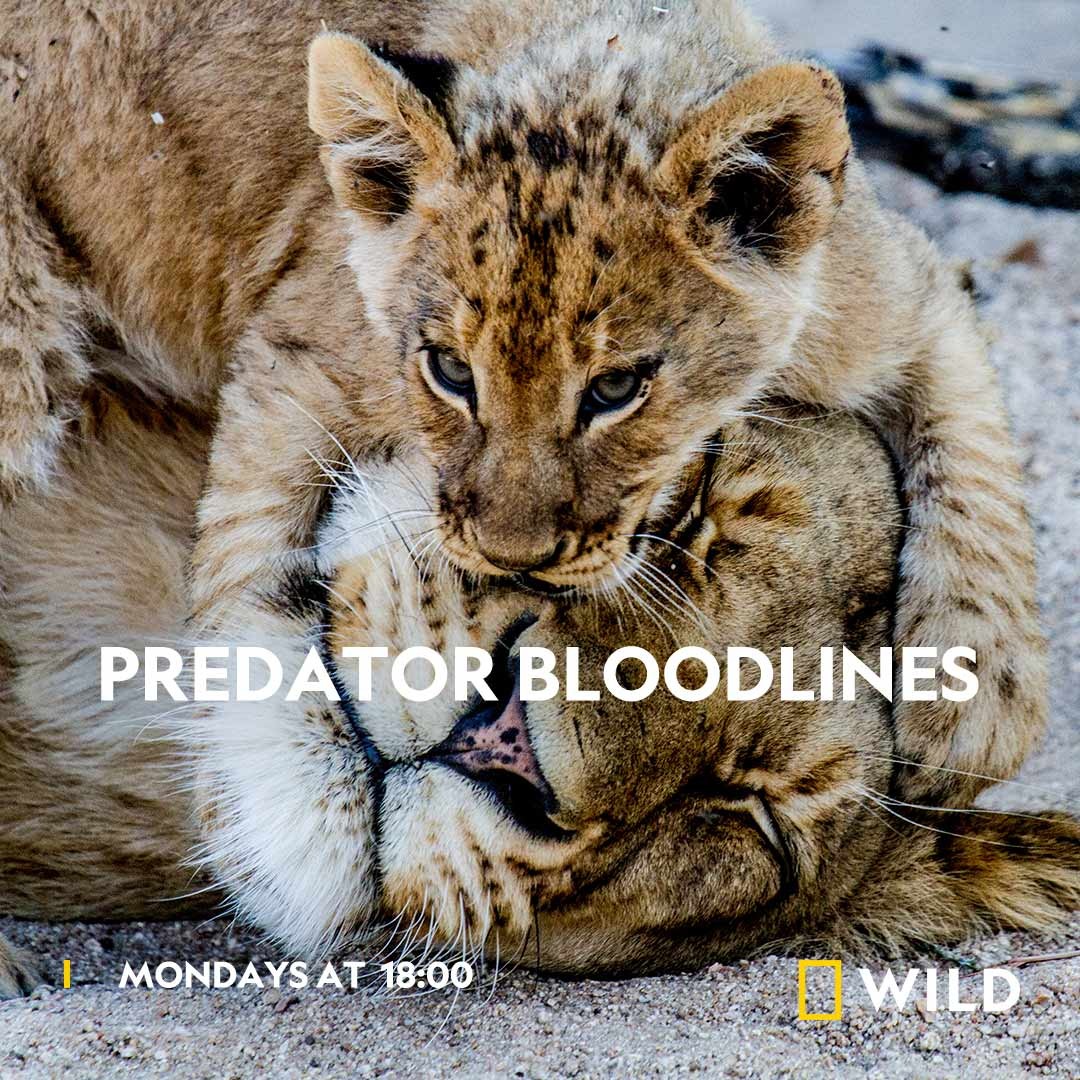 Predator Bloodlines on National Geographic Wild on StarSat o2