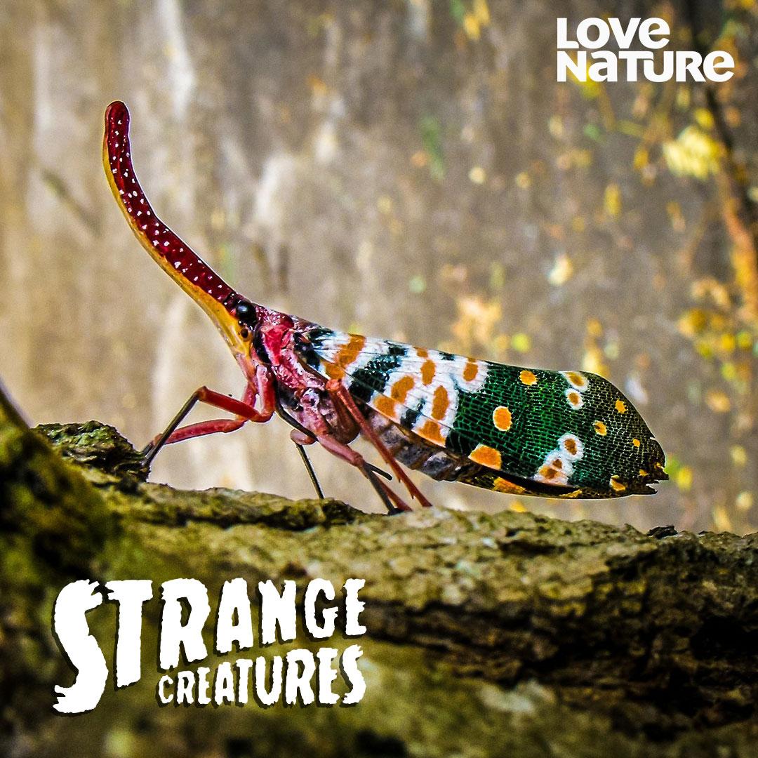 Strange Creatures on Love Nature on StarSat - web